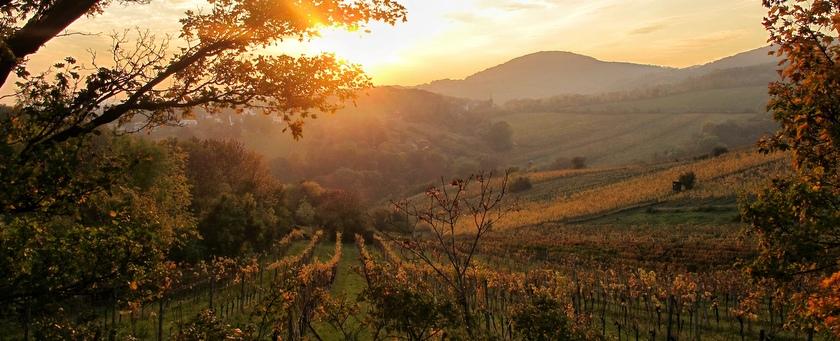 een wijn-nitwit gaat wijn proeven oostenrijk