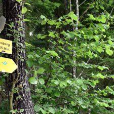 De slow trails van Karinthië