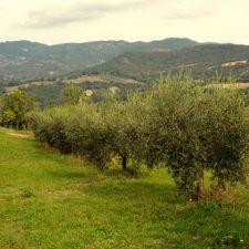 De smaken van Assisi - deel 1